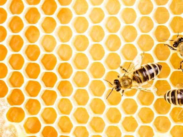 13 Incredible Benefits of Propolis by Leigh Ann Lindsey